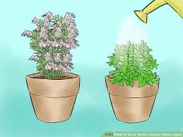 growing plants indoors with artificial light 3 ways to grow herbs indoors under lights wikihow