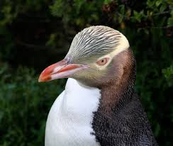 penguins smithsonian ocean portal