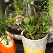 houseplants squak mt greenhouses u0026 nursery