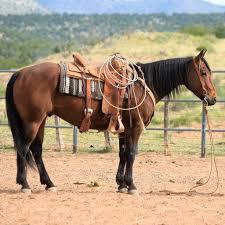 double j ranch australian shepherds sold horses boyd ranch llc