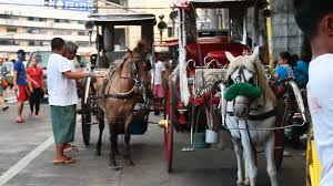philippine kalesa how it happens 8 things kalesa drivers and horses wish you knew