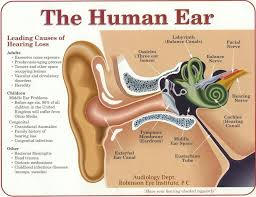 Ear Anatomy Pictures Remedy For Clogged Ears Ear Anatomy Lesson To Help Understand Why