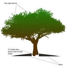 tree mulching fort worth