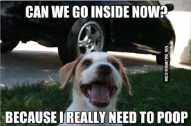 Funny Puppy Memes - funny puppy logic meme bajiroo com