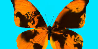 geopolitical risk the butterfly effect and black swans fti journal