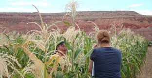 az bureau arizona farm bureau the voice of arizona agriculture