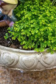 Indoor Container Gardening - indoor container garden u2022 nourish and nestle