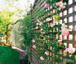 70 backyard privacy fence landscaping ideas on a budget u2013 goodsgn