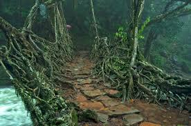 What Is Root Bridge Meghalaya Speakzeasy