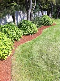 Lawn Landscape by 17 Low Maintenance Landscaping Ideas U2013 Chris And Peyton Lambton