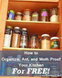 warning food cupboard moths page forum small insects cupboards