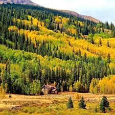 Colorado travel style images 29 best fall colors in breckenridge images aspen jpg
