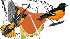 Dove Migration Map The Basics Of Bird Migration How Why And Where All About Birds