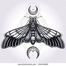 deaths head moth clipart moon pencil and in color deaths head