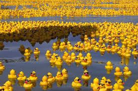 image rubber duck sea by whispering 1 jpg animal jam