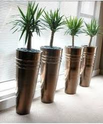 barrel cactus in sets of 3 tall planters succulent sustenance