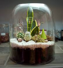terrarium kit the new domestic