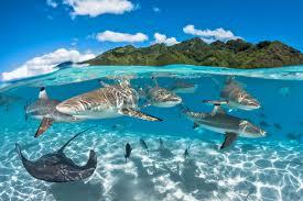 Map Of Tahiti Tahiti Superyacht Agents Seal Superyachts Agents
