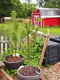 44 best my vegetable garden images on pinterest nests veggie