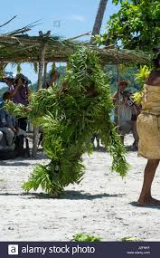 santa cruz native plants melanesia solomon islands santa cruz stock photos u0026 melanesia