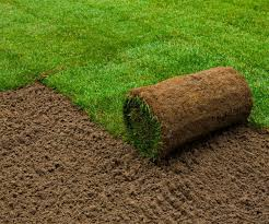 types of grass for florida lawns