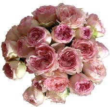 flowers in bulk bulk garden roses flower at wholesale bulk garden roses online
