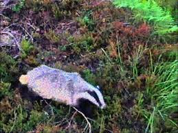 Honey Badger Meme Generator - list of synonyms and antonyms of the word nope badger