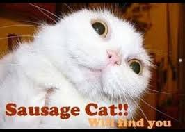 sausagecat lol cat sausage greeting card for sale by molly