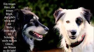 sprüche hund treue 32 schöne hundesprüche zitate teil 1
