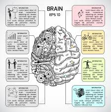 brain hemispheres sketch infographic set with intellect and