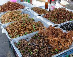insectes dans la cuisine défi cuisine insectes