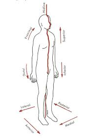 Human Anatomy Planes Of The Body Anatomical Directional Terminology