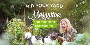 Eliminate Mosquitoes In Backyard by 5 Ways To Get Rid Of Mosquitoes In Your Yard Wondercide Blog