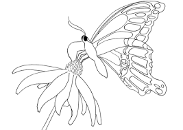 butterfly on daisy coloring page free printable coloring pages