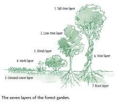 designing a forest garden the seven layer garden chelsea green