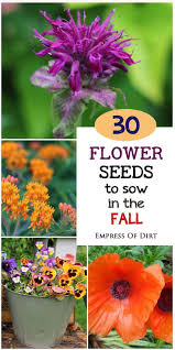 30 flower seeds to sow in the fall flowering plants plants and