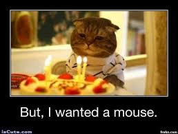 Meme Generator Cat - sad birthday cat meme generator captionator caption generator