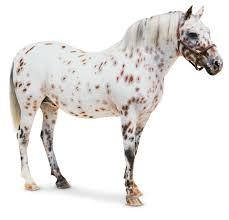pony pony facts kids dk