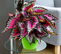 poisonous indoor plants that are dangerous check more at http
