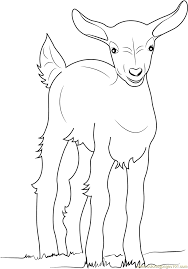 baby goat coloring page free goat coloring pages
