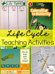 second grade nest teaching life cycles