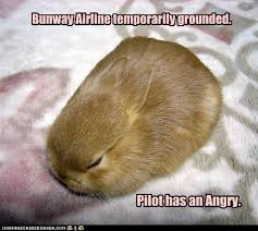 Angry Bunny Meme - bunway airline temporarily grounded i can has cheezburger