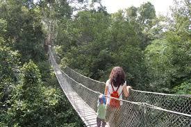 canopy amazon peru spiced destinations