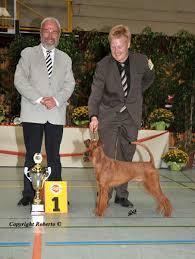 Gerichtet wurden unsere Irish Terrier auf der diesjährigen Klubsieger von dem international renommierten Allgemeinrichter Jochen Eberhardt. - Darren_600