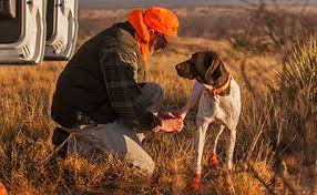 hunting dog boots best boot for active dogs