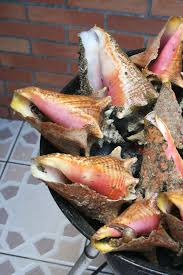 recettes de cuisine antillaise lambi grillé recette antillaise parce que masterchef a su mettre