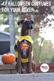 boxer dog kills man 47 cute fun and scary halloween costumes for your boxer