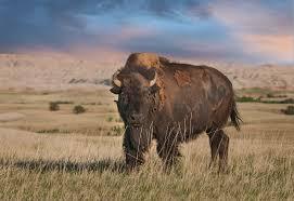 South Dakota wild animals images South dakota mt rushmore western heritage shareamerica jpg