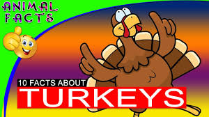 turkey bird facts for turkey thanksgiving animal facts
