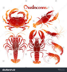 graphic crustaceans collection seafood menu sea stock vector